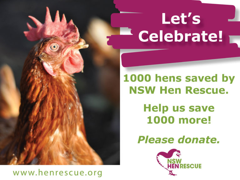 1000 Hens Saved by NSW Hen Rescue!
