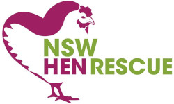 NSW Hen Rescue
