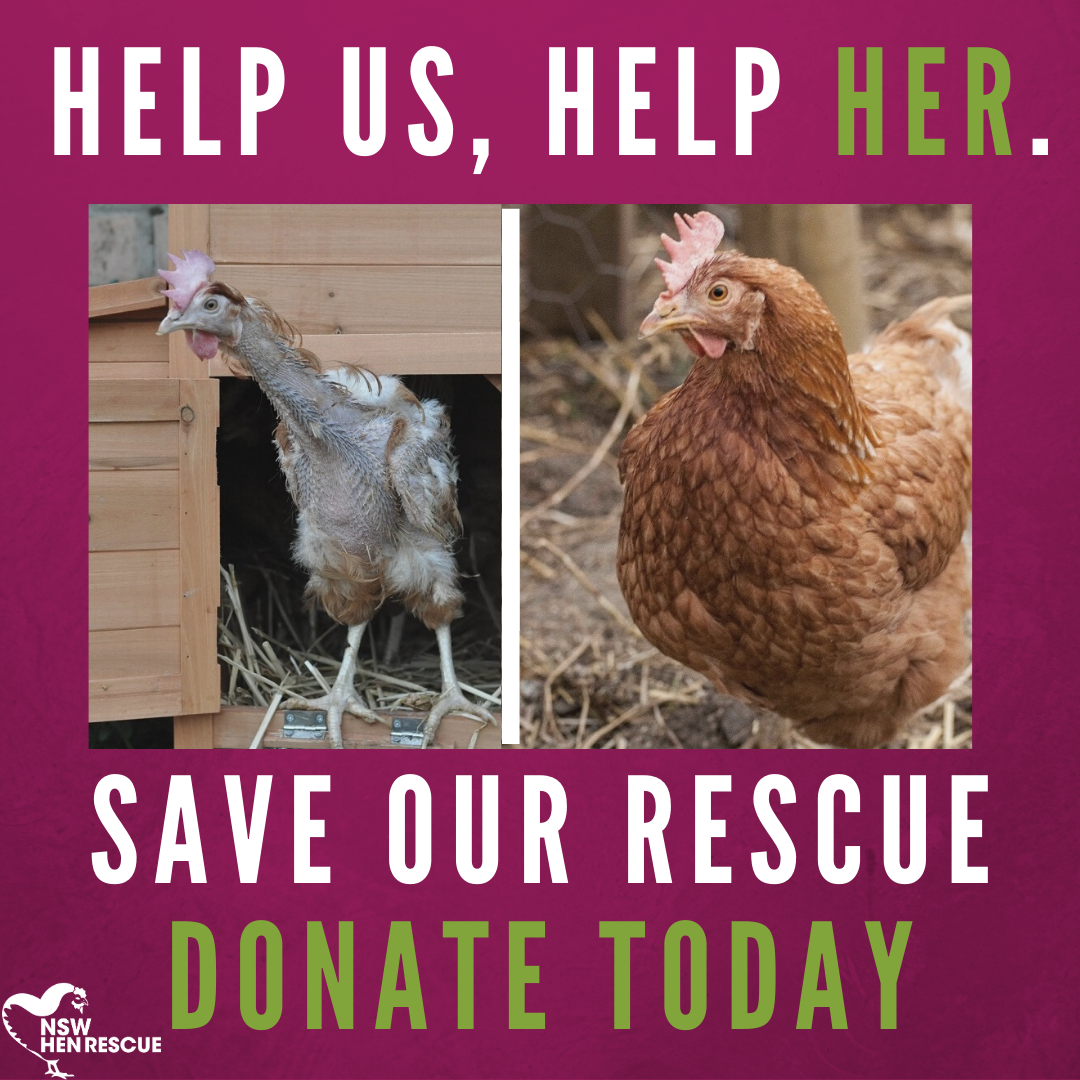 Save Our Rescue: Project Hen Haven